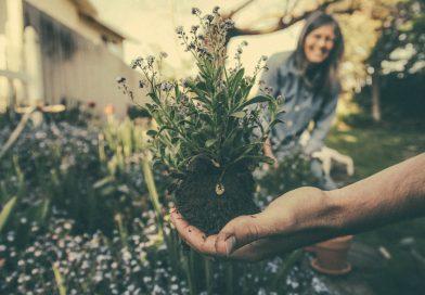ogród dla początkujących