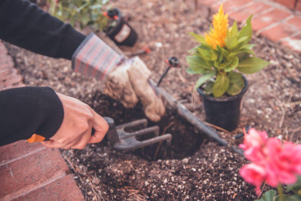 ogród dla początkujących sadzenie