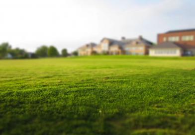 Żółte plamy na trawniku, a szkodniki oraz błędy w pielęgnacji