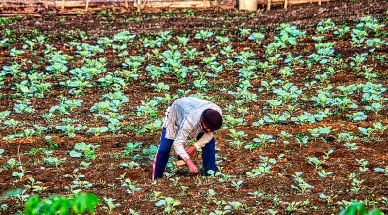 Nawożenie trawnika, czyli co wybrać i kiedy nawozić?