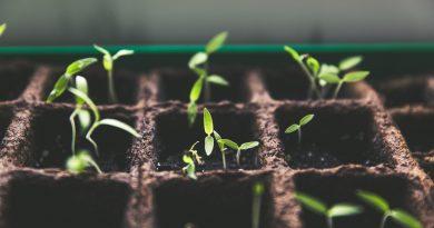 rośliny za darmo